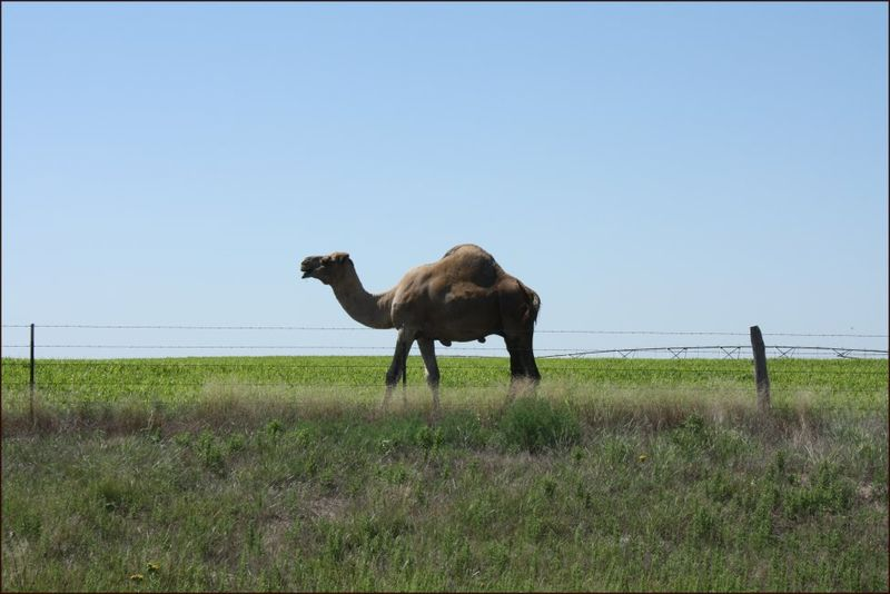 Unexpected wildlife in the Oklahoma panhandle.