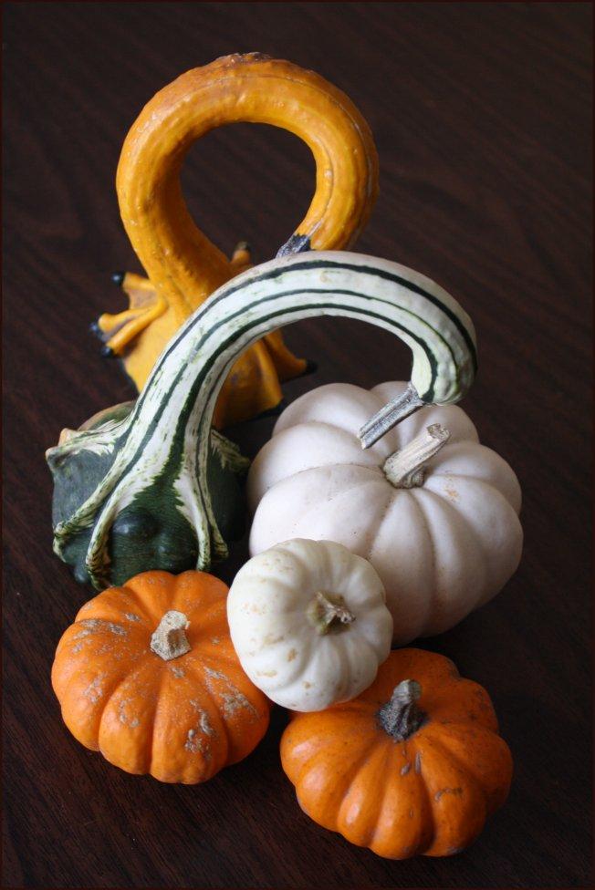 Pumpkins and Swans