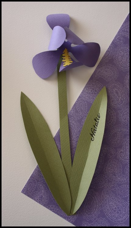 Paper iris