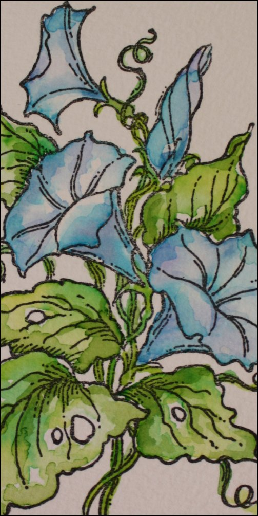 Morning glories watercolored