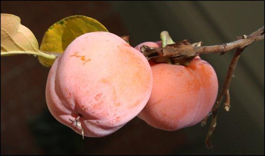 Perfect persimmon pair