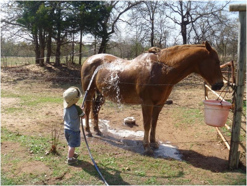 Washing a horse. Little Man gives Sherman a bath.