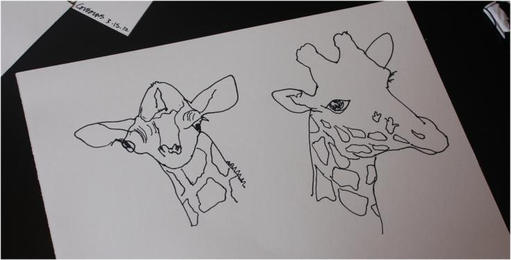 Blind contour drawings of giraffes - interior lines added